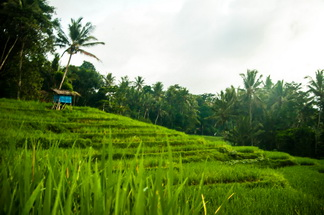 Rice terrace in the village